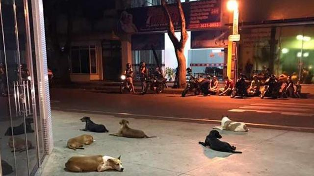 Dogs Wait Patiently Outside Hospital For Homeless Owner To Get Better.
