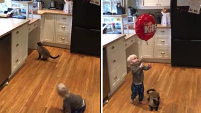 Cat Wants Babys Balloon- PetTube