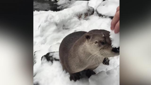 Oregon Zoo animals enjoy snow day like kids given day off from1