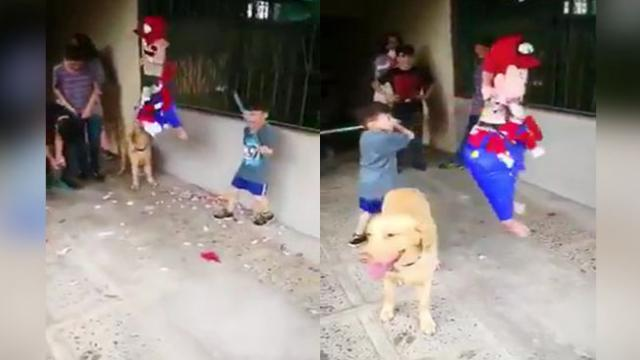 Dog Sees Boy Struggle With Piñata — And Decides To Finish The Job Himself
