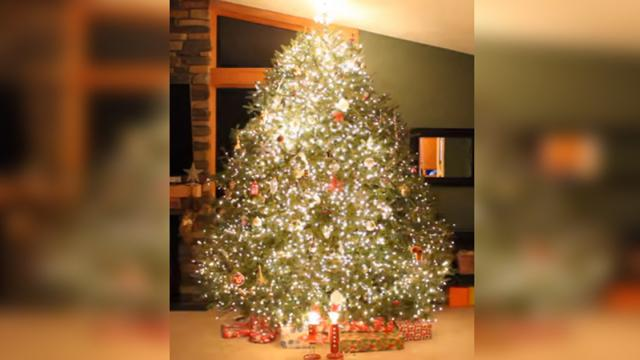 Wawra Christmas Tree Lights 2016-Mariah Carey-All I Want For