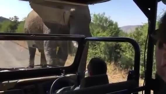 Angry elephant charges Arnold Schwarzenegger in South Africa