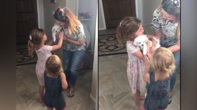 Sisters Begged So Long For A Puppy. Moment They Finally Get It Is Warming Everyones Hearts