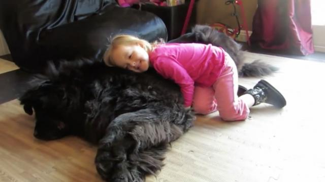 She asked to hug The dog, but The way he responded surprised even Mom.