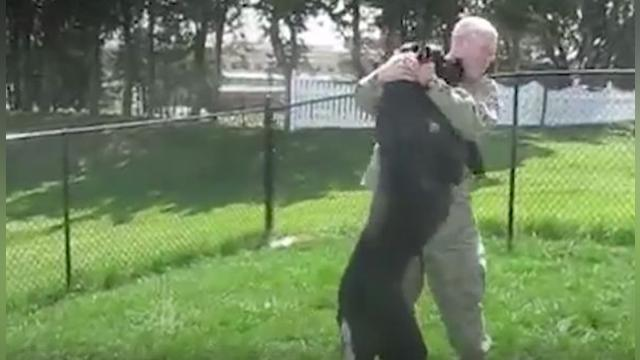 Soldiers Come Home to Dogs Compilation _ The Dodo