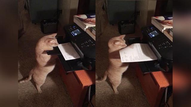 Impatient Kitty Steals Paper Right Off The Printer