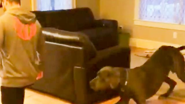 Great Dane Hilariously Joins Dad During His Warm-Up Routine.