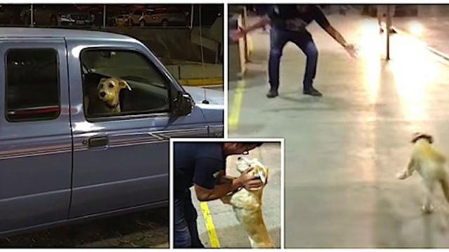 Dog Flips Out When He Sees His Owner At Airport After 10 Days