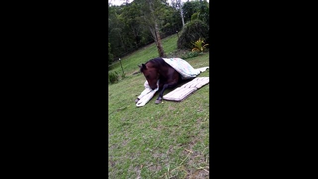 Funny cute horse bedtime