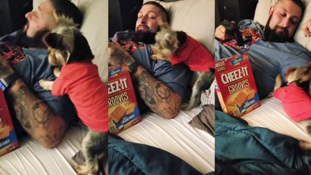 'No Cheez-Its!' – Pup Will Stop at Nothing to Get Her Favorite Treat - Storyful Video