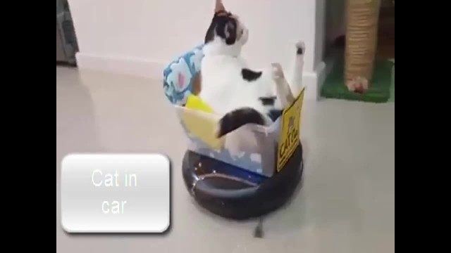 Cat supervises cleaning from the comfort of a clever, makeshift car