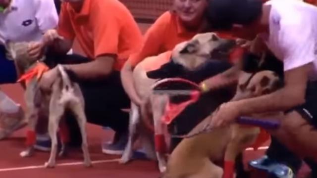Shelter dogs used as ball boys at Brazil Open Tennis tournament [JIi29IIN1ig]
