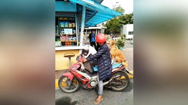 Nervous dog leaps onto back of master's motorbike