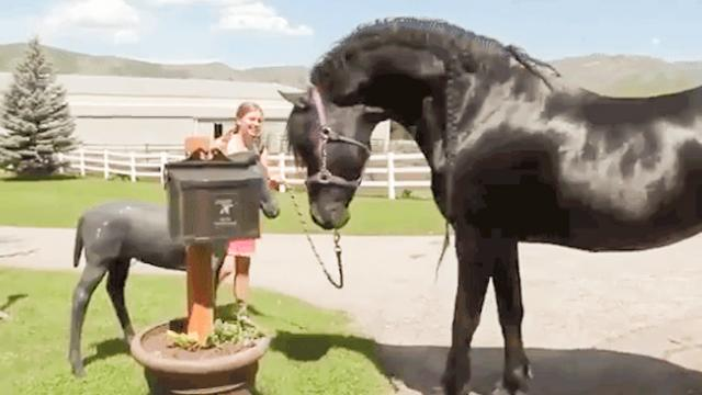 Horse Becomes Infatuated With a Plastic Statue That Looks Just Like a Smaller Version of Him