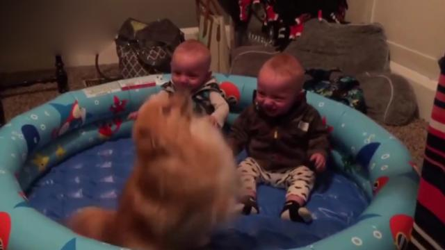Twin Babies Think Pomeranian Is Hilarious, Their Giggles Will Have You In Hysterics