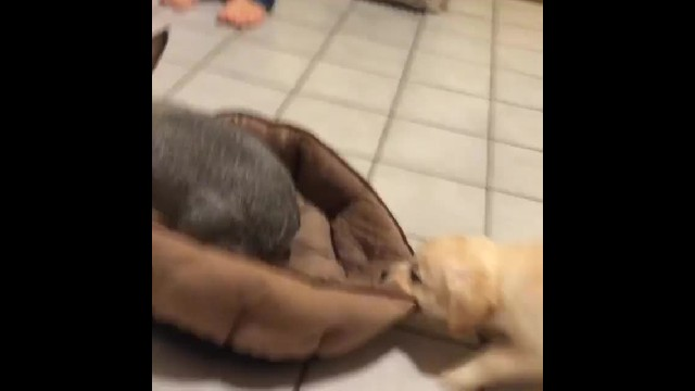 'Bunny, this is my bed!' says frustrated puppy