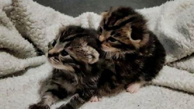 Kittens separated a few days old were reunited and its so heartwarming