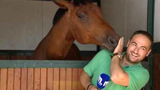 Reporter Steps In Front Of The Camera But The Horse Has The Crew Howling In Laughter