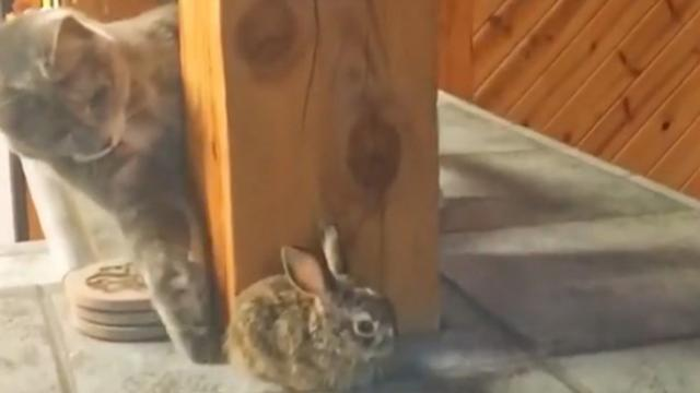 Ninja Cat Pokes Rabbit But Bunny Knows What's Up.