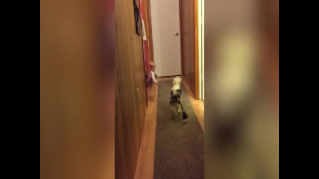 Cutest Baby Reaction to a Dog Playing Fetch