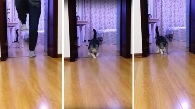 Hilarious moment cheeky owner tricks his cat with an invisible door barrier by using tape