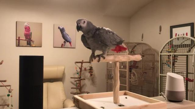 Parrot Asks Google Home A Question And Gets A Clear Answer