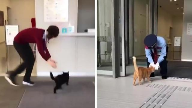Curious cats bring fame to Japanese museum that won't let them in_Large