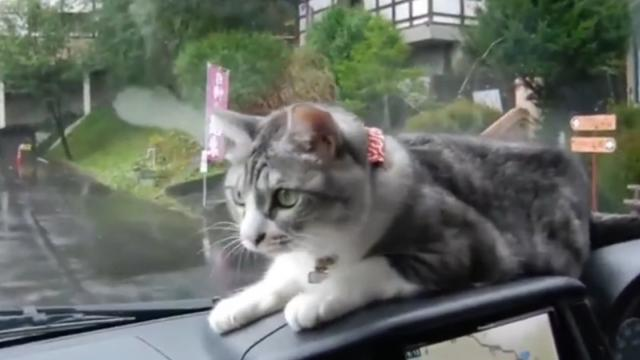 CAT SEES WINDSHIELD WIPERS SWIPE BEFORE HIS EYES- WHAT HE DOES WILL HAVE YOU BURSTING IN LAUGHTER