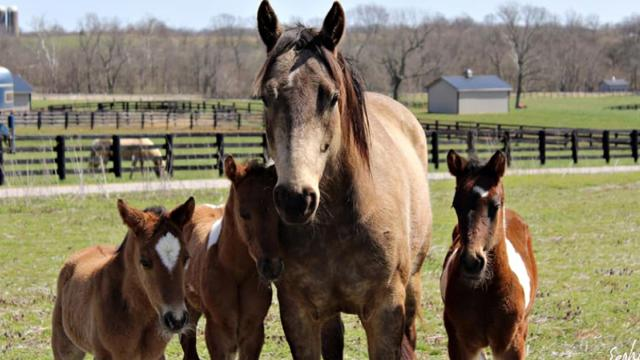 Kentucky Humane Society Equine CARE - Bucket Gets a Fourth