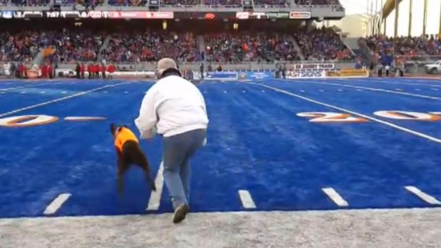 tee retrieving dog at Boise State