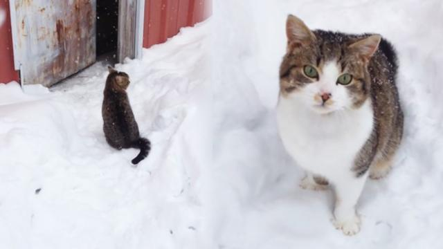 Playful Kitten Discovers the Wonders of Chasing His Tail Outside in the Falling Snow