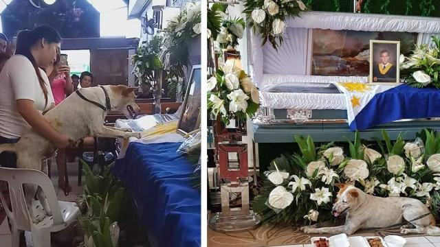 Faithful dog stays at owner's side who already passed away