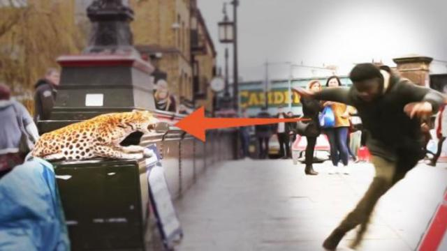 Leopard Spotted in London Prank Will Have You in Stitches