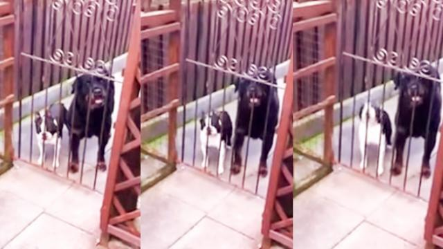 Dog Surprises Owner By Saying Hello As He Gets Home