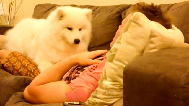 I Can't Stand How Cute This Is — This Puppy Asks Permission To Snuggle. - The Autism Site Blog