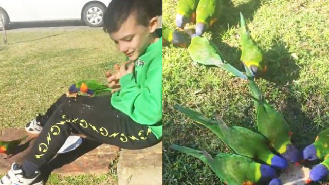This Adorable Boy on the Spectrum Has the Best Day of His Life, Thanks to These Colorful Birds