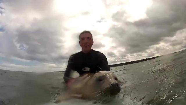 2 Surfers Let A Friendly Sea Lion Ride Thier Surfboard