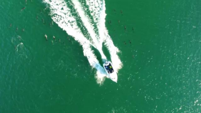 Boaters caught on video illegally running over pod of dolphins, outrage ensues