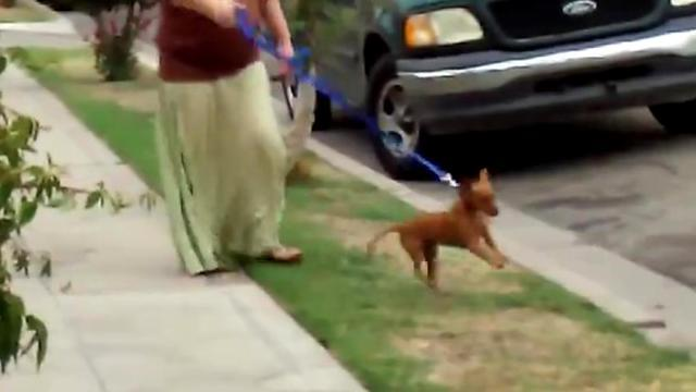 This dog takes out a lot of rage on that leash!