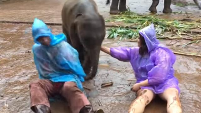 Baby Elephant Gives Woman Moment She Wont Forget