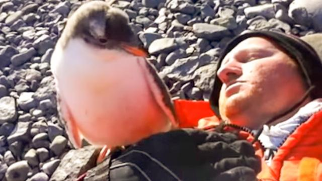 This Baby Penguin Sees His First Human — And His Reaction Is ADORABLE! - The Autism Site Blog