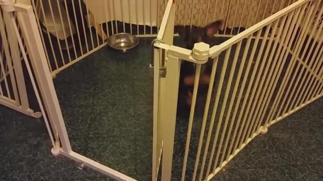 This Puppy Can t Find His Way Out Of Crate