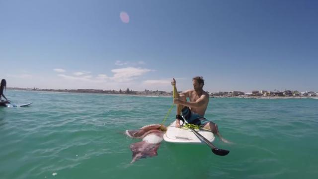 Giant Squid Wraps It's Tentacles Around Paddle Surfer's Board