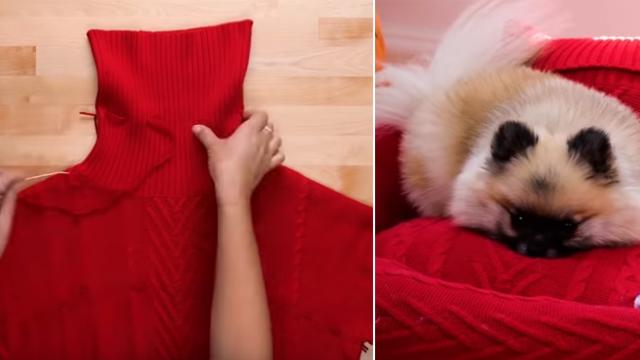 Ideas y trucos geniales para divertirte con tu mascota - Video