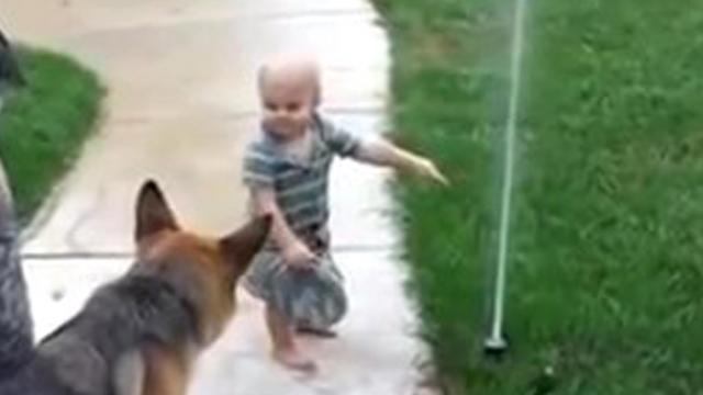 German Shepherd Terrified Of New Sprinkler Until Toddler Helps