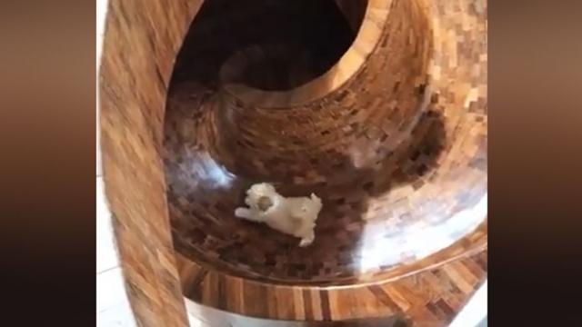 Owner Discovers Dog's Love Of Slides, So She Builds One Inside & We're Insanely Jealous_Large