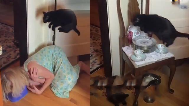 THIS CAT IS AFRAID OF ONE SPOT IN THE KITCHEN SO HER OWNER TOOK ADVANTAGE OF IT FOR SOME GREAT ENTER