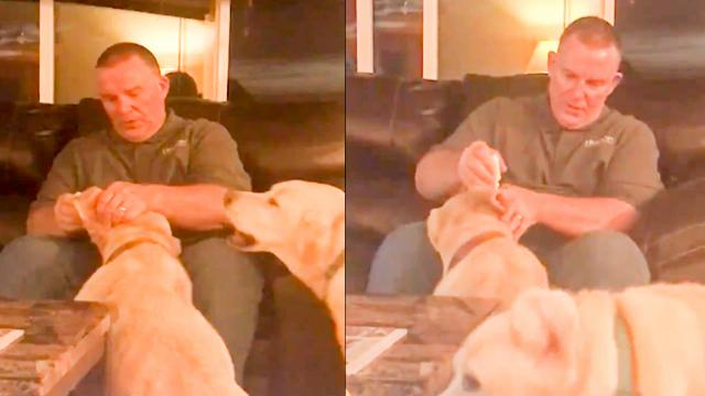 Dog jealous of other dog's ear medicine is the most wholesome thing we've seen