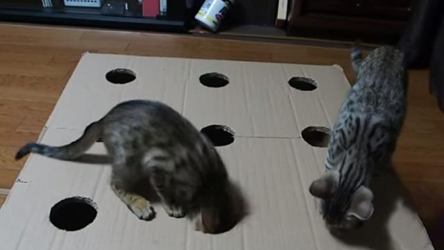Kittens play a fierce round of Whack-A-Cat