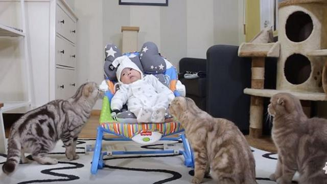 Look How These Adorable Cats React to the New Baby, This is